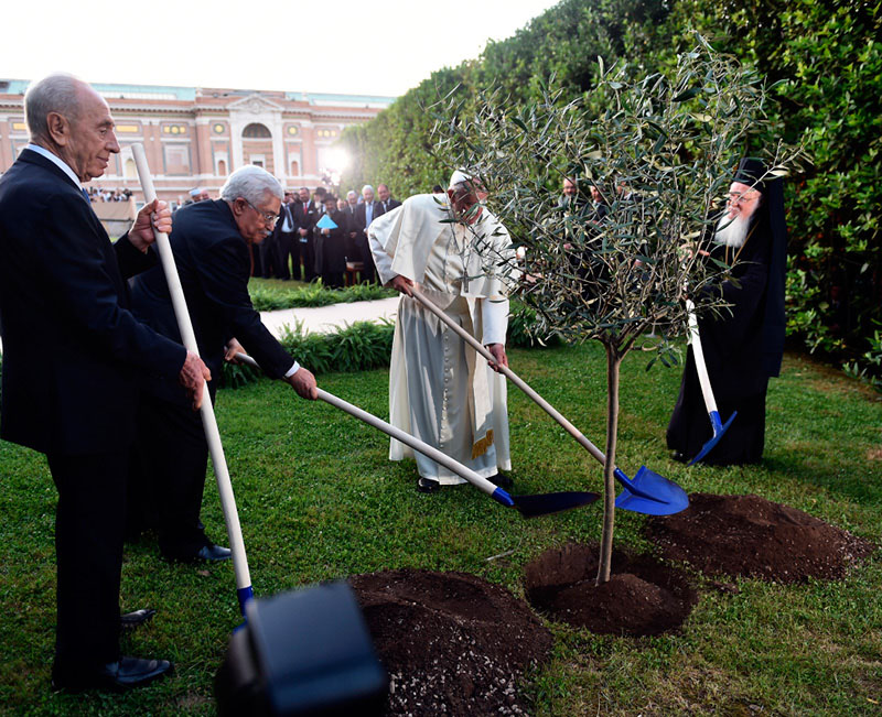 Israeli President Shimon Peres, Palestinian President Mahmoud Abbas, Pope Francis and Ecumenical Patriarch Bartholomew of Constantinople plant an olive tree after an invocation for peace in the Vatican Gardens June 8. (CNS photo/Cristian Gennari, pool)